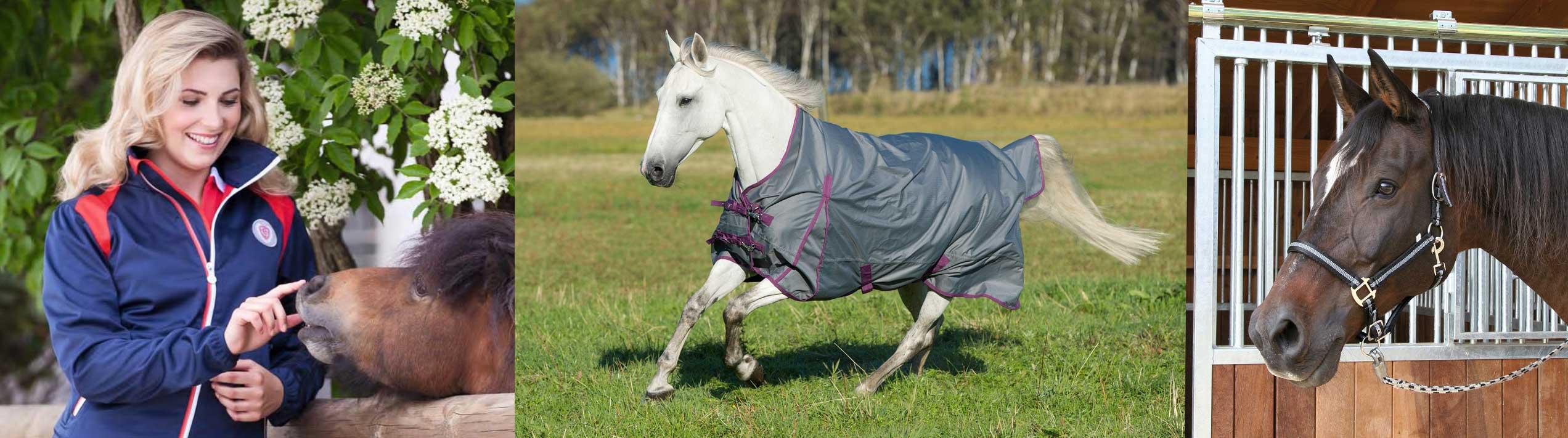 Blätterkatalog Pferd, Reiter