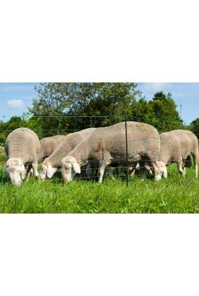 Schafnetz grün